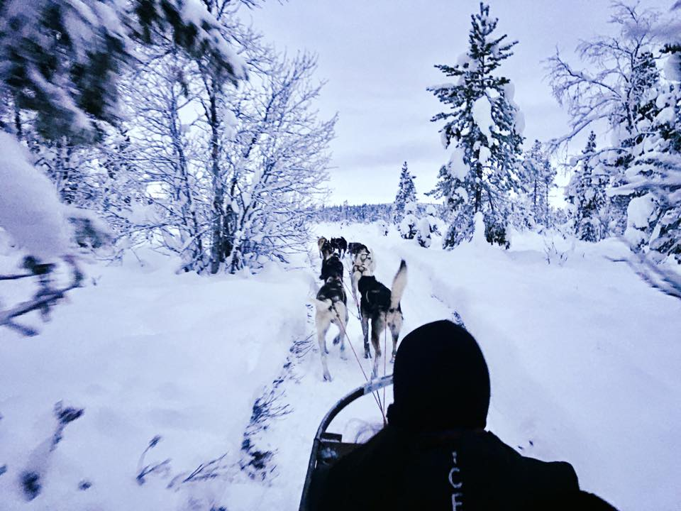 Sled Dog ride in Winter Wonderland