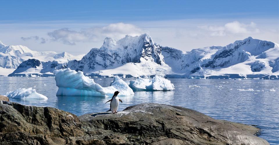 antarctica-polar-nature-1-penguin-vista