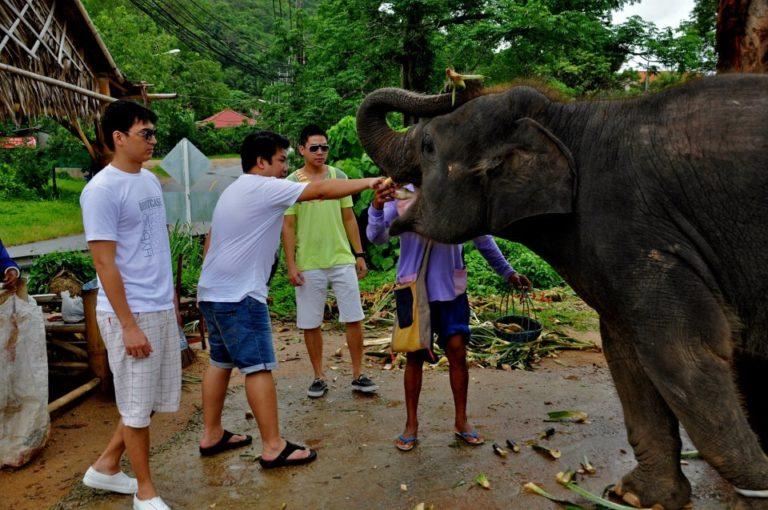 Safari and City Tour