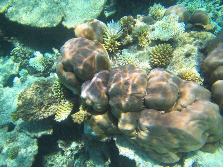 coral-reef-10