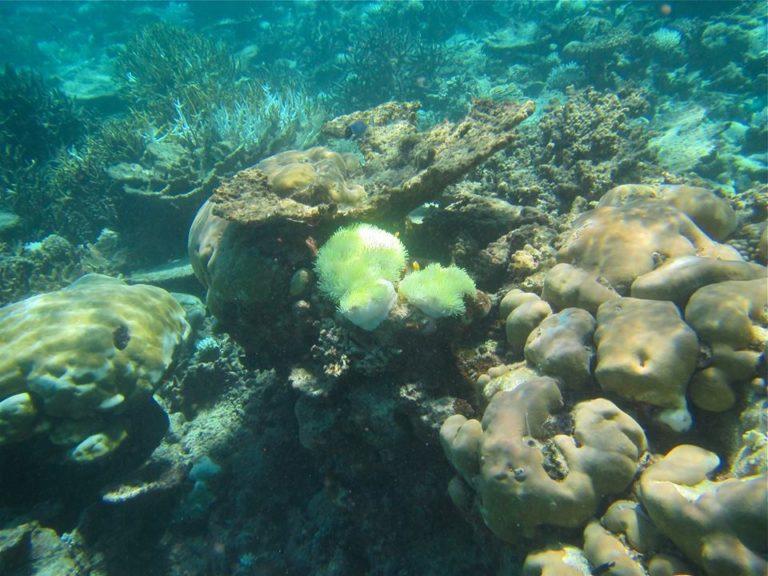 coral-reef-11