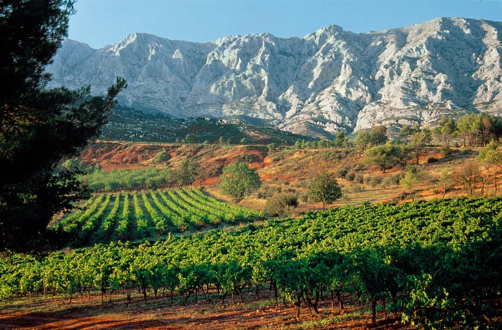 FRANCE Provence Vineyard