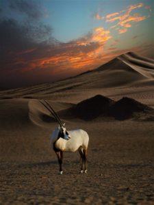 dubai-desert-conservation-reserve-450a17eef08b-768x1024