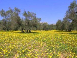 alpilles-regional-nature-park-39322_w600