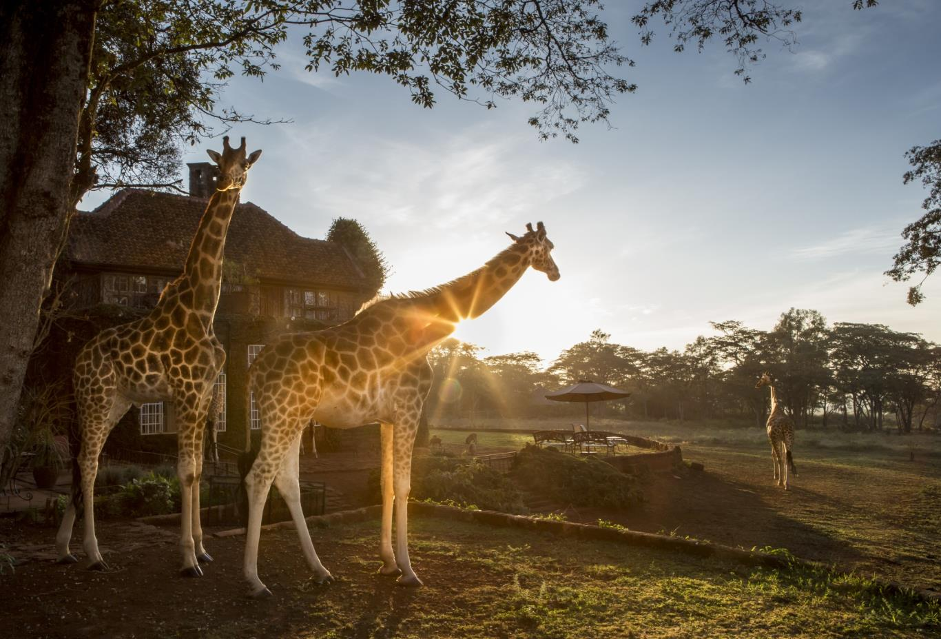 Sunrise at Giraffe Manor-touch